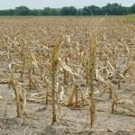 Les grandes sécheresses en France (3) dans EVENEMENTS AU TRAVERS DES SIECLES secheresse-150x150