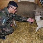 messaoud-v-et-le-maitre-belier-du-1e-regiment-de-tirailleurs-150x150